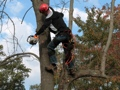 Australian Tree-Removal Services